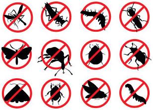 škodcovia - hmyz